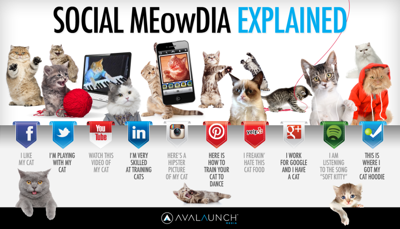 social-media-explained-by-cute-cats_5127ca6880db9